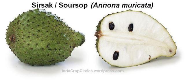 sirsak-soursop-annona_muricata